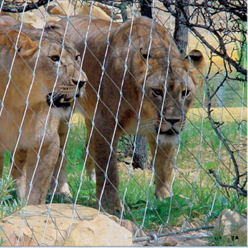 Lion safety isolation mesh