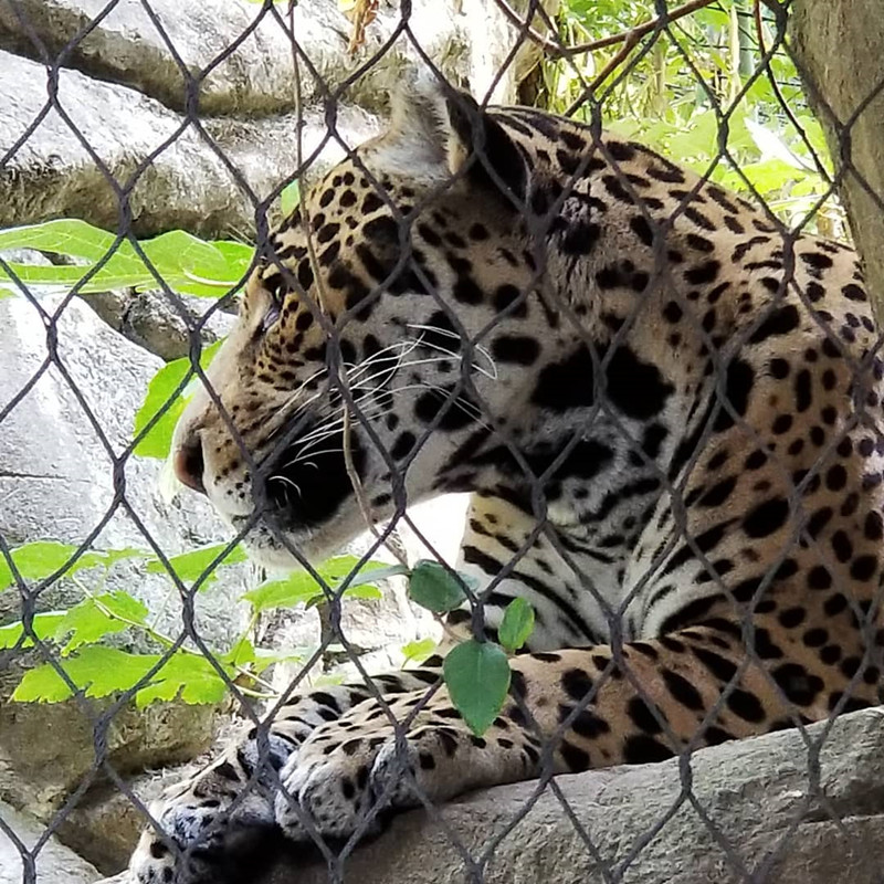 Leopard enclosure fence net
