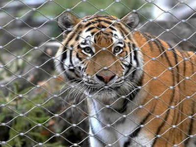 Tiger cage fence mesh